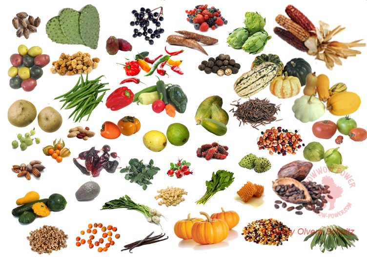 Indigenous foods powwow power com for Aboriginal cuisine